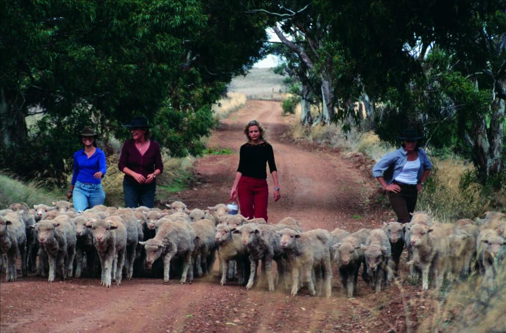McLeods Daughters series 1 - Jodi learns to drove sheep